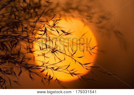 Dry branches against the evening sun. Branches of plants with leaves at sunset