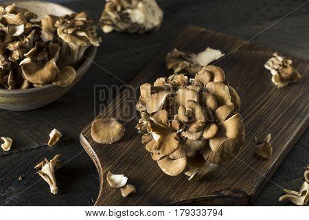Raw Organic Maitake Mushrooms