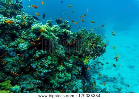 Tropical fishes on the coral reef. Summer vocation. Diving.