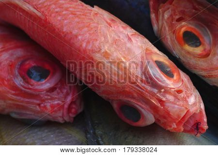 Red Grouper Fish, Diagonally Positioned In The Frame, With Huge Black Two Face Other Fish.