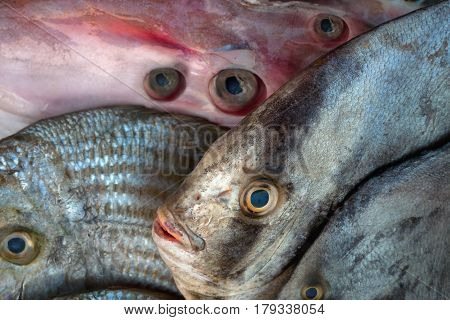 Unusual Exotic Saltwater Fish And Squid Carcass For Sale, Fish Are Arranged So That A Lot Of Eyes.