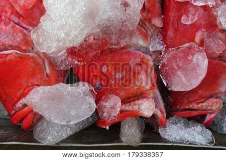 Sea Red Fish With A Wide Open Mouth Lying With Pieces Of Ice, Fresh Sea Food, Indian Sea, Goa, India