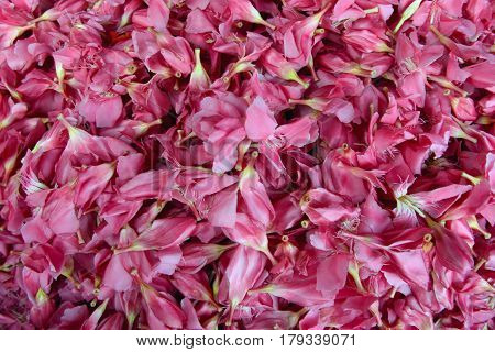 Bright cheerful spring background of a variety of pink exotic tropical flowers Asia.