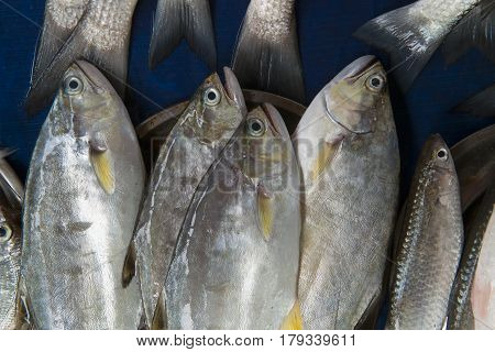 Large Marine Deep-sea Fish Tuna For Sale: The Fish Are Piled In A Pile In Metal Basin, The Tails Of
