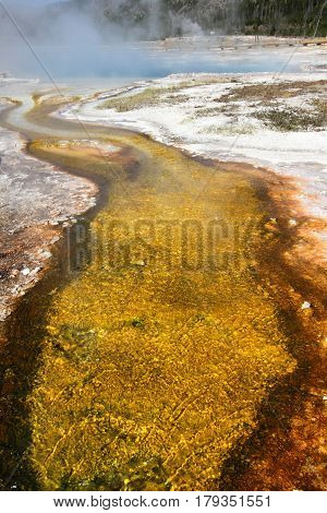 Colorful Bacterial Mat in Mammoth Springs In Yellowstone National Park
