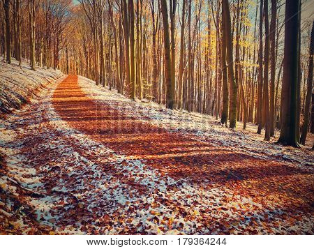Curved Colorful Snowy Forest Road In Early Winter Forest. Fresh Powder Snow
