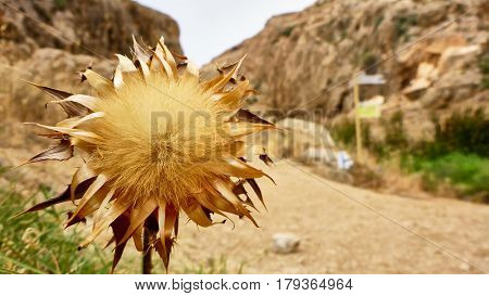 Gray Dried Bur In The Desert