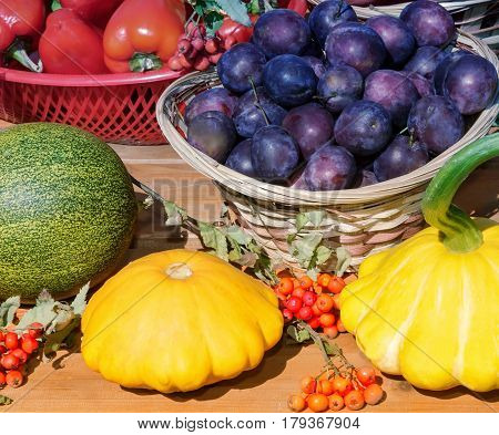 On the table in a wicker basket large plum next to pumpkins tomatoes and berries of mountain ash.