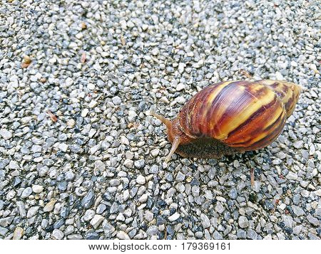 Snail is slowly climbing the concrete floor