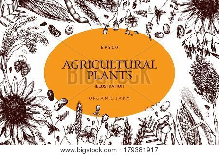 Vector design with ink hand drawn agricultural plants sketches. Vintage illustration with legumes, cereal crops, sunflower and flax.