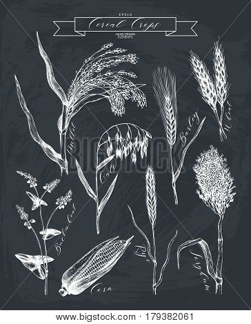 Vector collection of ink hand drawn agricultural plants sketches. Vintage illustration with legumes, cereal crops, sunflower and flax. Farm fresh and organic plants set.