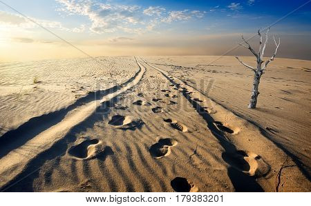 Dry tree in the sand desert at sunset