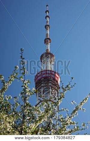 Kiev. TV tower with blossom tree in foreground. Clear blue sky in background.