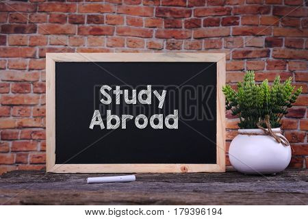 Study Abroad Word On Blackboard With Green Plant.