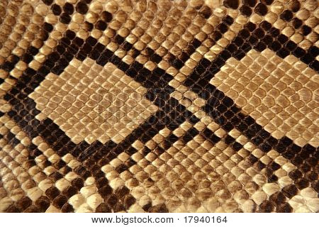 Background snake skin pattern brown and beige color