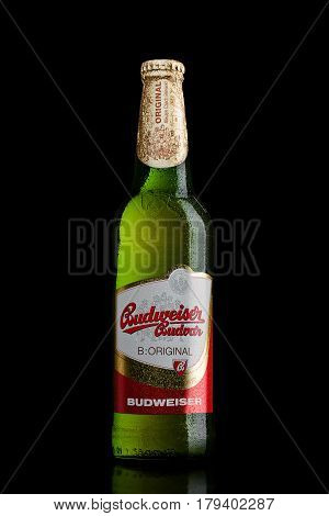 London,uk - March 30, 2017: Bottle Of  Budweiser Budvar Beer On Black, One Of The Highest Selling Be
