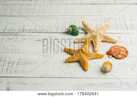 fish star and sea shells on the wood  background
