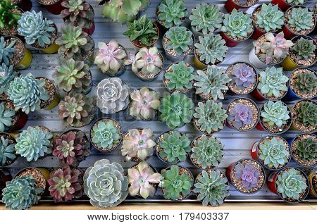 Table with many small round pots with cactus aloe and other plants. Top view.