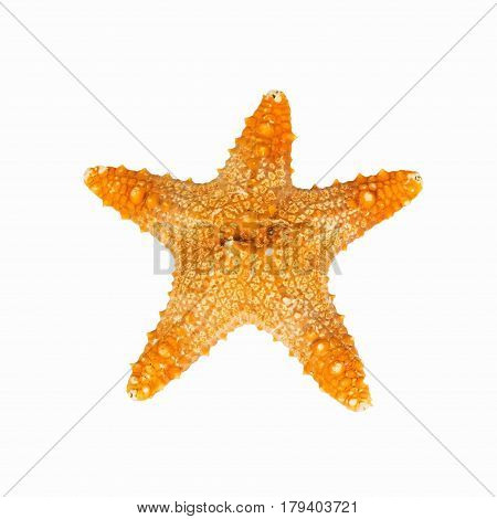 Star Fish on Isolated White Background ,