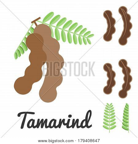 vector tamarind icon set , flat design