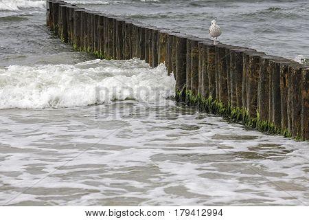 Wooden breakwaters in the waters of the Baltic Sea in Kolobrzeg Poland
