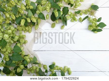 Border from green hop branches on light rustic wooden background. Concept of beer production. Mock up for beer presentation. Brewing.Herbal medicine.