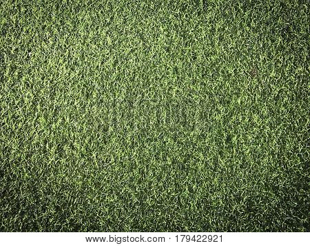 Artificial green turf grass for interior landscapes