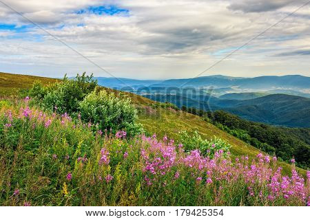 Meadow With Purple Flowers In Mountains