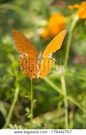 soft focus orange batterfly color sit on flower. Colorful orange batterfly with green leaf.