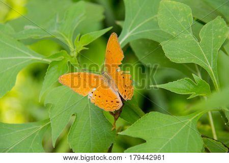 Orange batterfly color sit on flower. Colorful orange batterfly with green leaf.