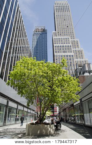 New York City USA - May 03 2015: tree in Manhattan between buildings urban spring