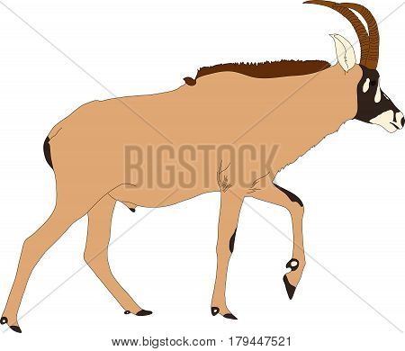 Portrait of a walking horse antelope, hand drawn vector illustration isolated on white background