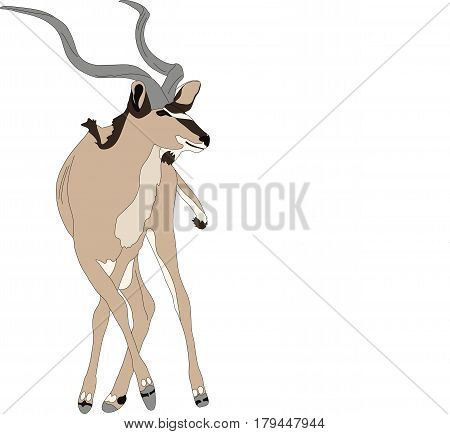 Portrait of a greater kudu antelope, hand drawn vector illustration isolated on white background