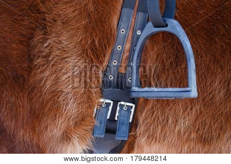 Photo of horse with saddle and stirrup in winter