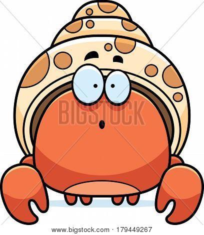 Surprised Little Hermit Crab