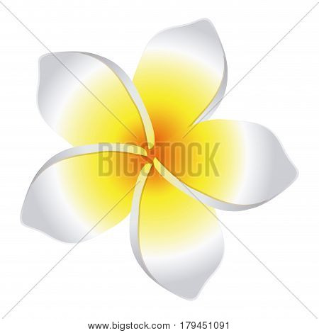 colorful flower with oval shaped petals vector illustration