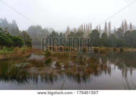 Forest Swamp, Lake In Fog