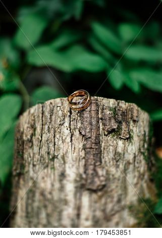 Gold wedding rings on a log with moss
