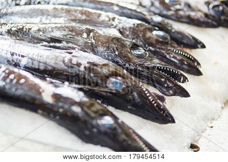 Atlantic Largehead Hairtails On Fish Market In Portugal