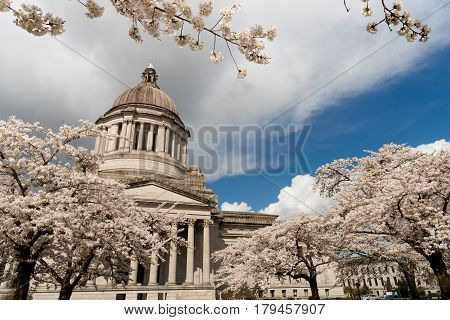 Beautiful flowering blossoms adorn the walkway outside the State Capital in Olympia Washington