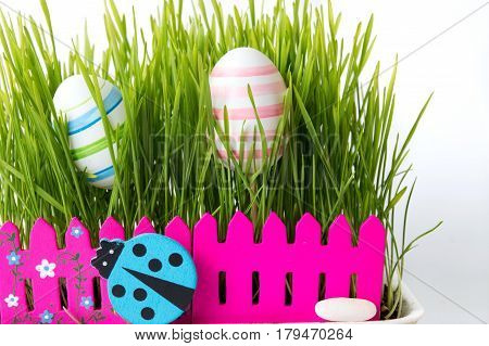 Easter Eggs And Green Wheat Plant