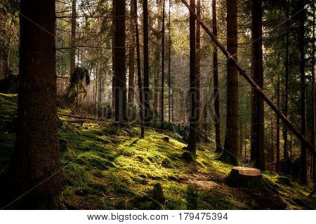 Magical morning sunlight in a forest in Baden-Wuerttemberg Germany.