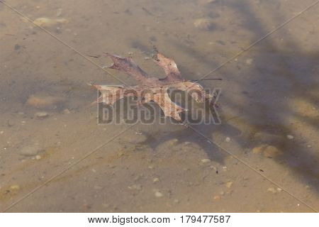 A single brown leaf floating on top of the still water