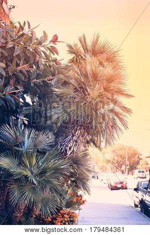 A street in Los Angeles with palm trees and trees a vintage effect. Vertical photo