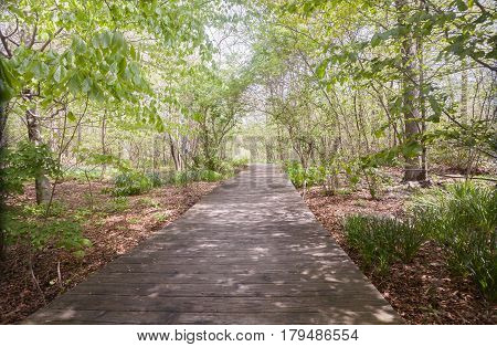Spring view of a boardwalk footpath in the woods.
