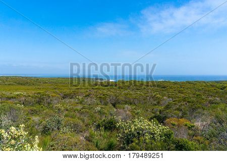 Panorama Landscape Of Green Bushland And Ocean On The Horizon