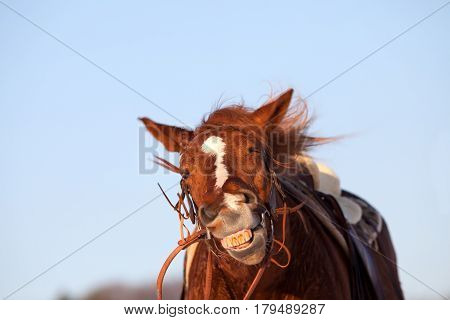 Funny Horse make smiling face close up