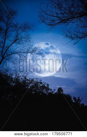 Silhouettes of dry trees against night sky with clouds and super moon over tranquil nature background. Landscape in the evening at national park. Beauty of nature.