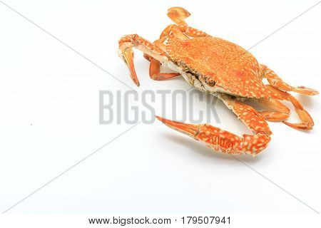 Steamed craps isolated on a white background Top view with copy space and text
