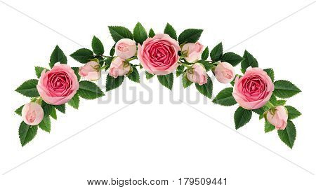 Pink rose flowers and buds arch arrangement isolated on white. Flat lay top view.